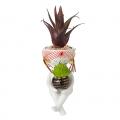Vaso piccolo *Annika* bimba con codini e pianta grassa Montemaggi